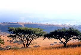 Séminaire «dynamiques socioécologiques dans des milieux de savanes en Afrique et Amérique du Sud» – 11 avril 2019